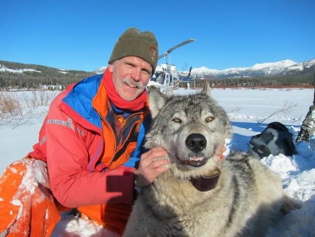 wolf wildlife biologist