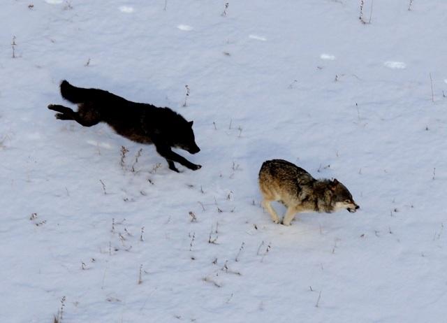 Photo courtesy of NPS