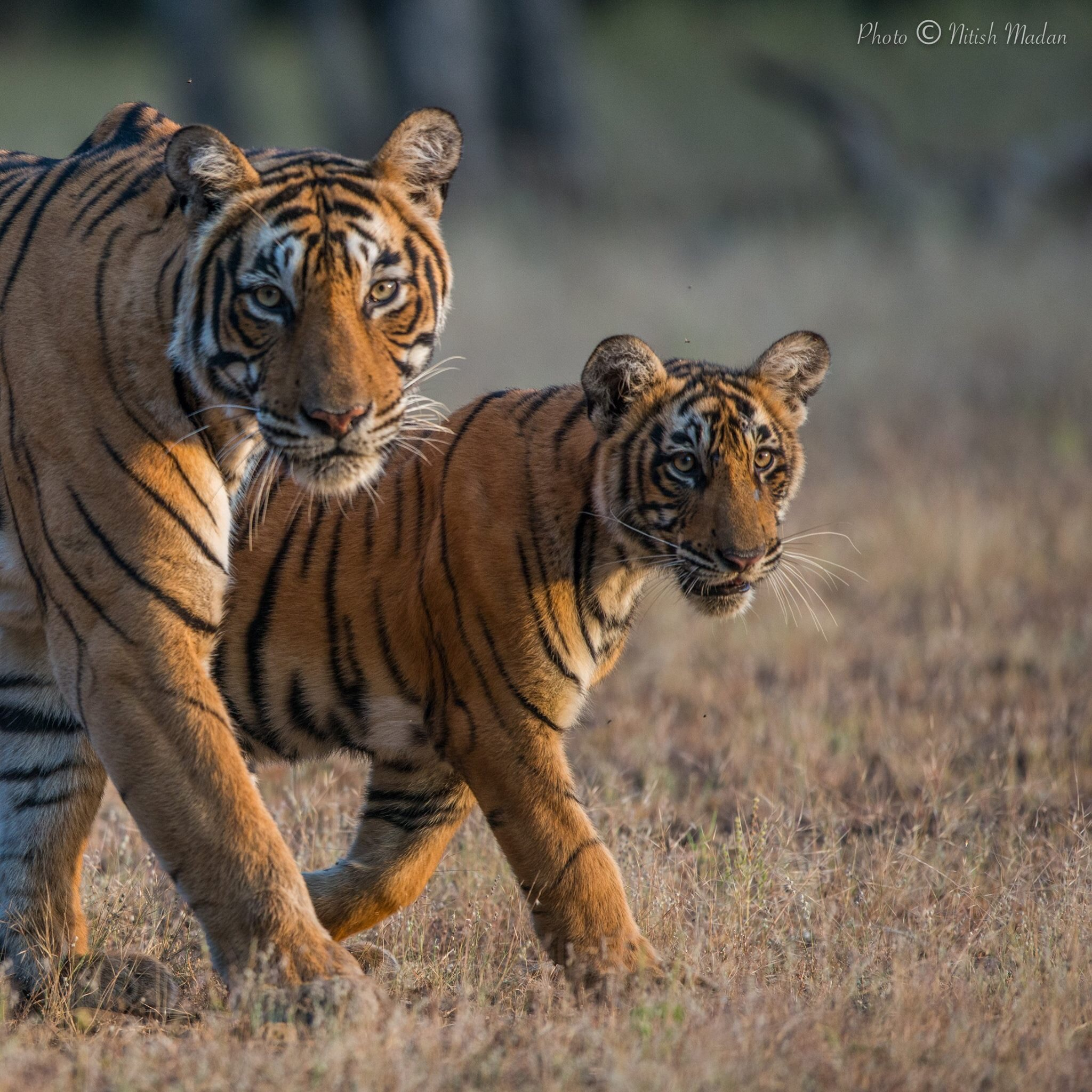 peaceful coexistence and responsible environmental stewardship for nitish madan photograph