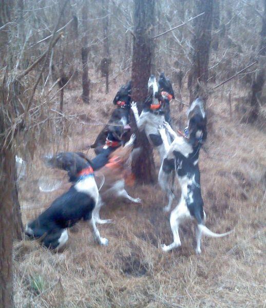 Free Dogs Madison Wi