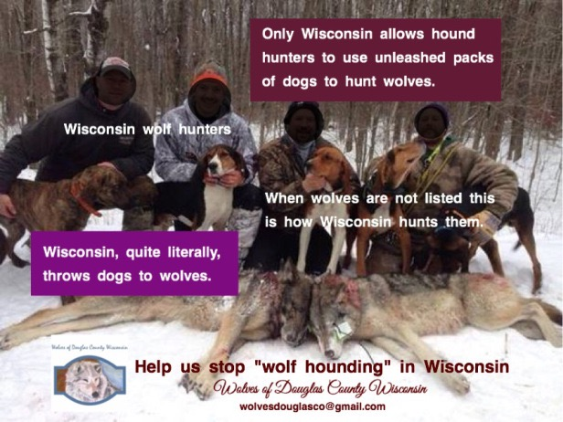 This is how Wisconsin manages an endangered species just off the ESL.