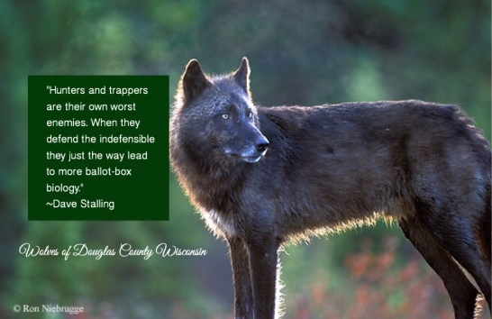 endangered species | Wolves of Douglas County Wisconsin Films